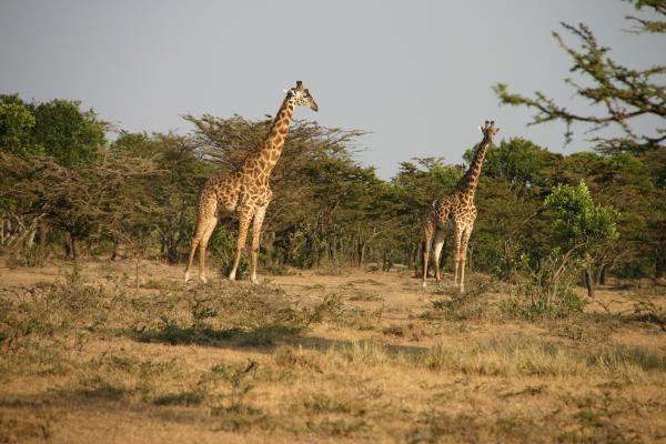 kenya_447
